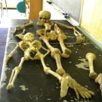 Cheasapeakeskeletons